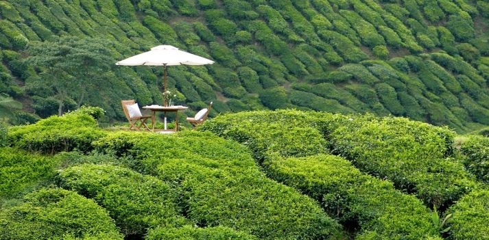 Malesia - Prestigioso resort tra piantagioni di the e di fragole: Cameron Highlands Resort