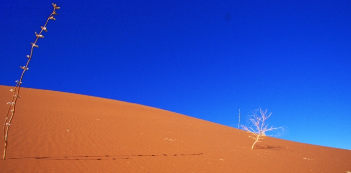 Viaggio in Namibia con Azonzo Travel   2