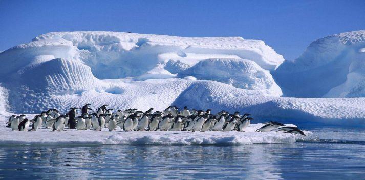 Viaggio in antartide colonia dei pinguini imperatore e - Pinguini di natale immagini ...